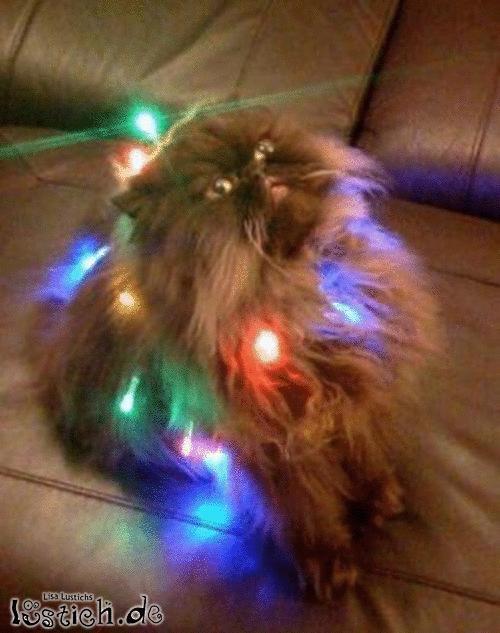 Ich bin kein Weihnachtsbaum?