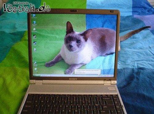 Katzen-Deskop