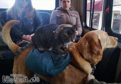 Neulich in der Bahn