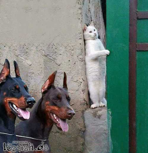 Verstecken im Tierreich