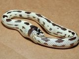 Schlange frisst sich selbst