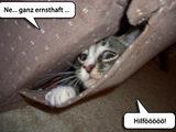 Katze braucht Hilfe