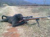 Sniper Affe