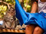 Da staunt der Affe