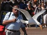 Vogel klaut Eis