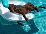 Urlaub machen für Hunde
