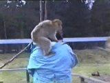 Attacke der Affen
