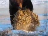 Einen Bärenspaß
